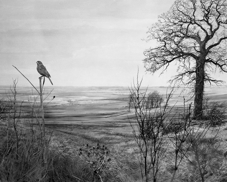 Maison de l'oiseau 01- Claude Belime