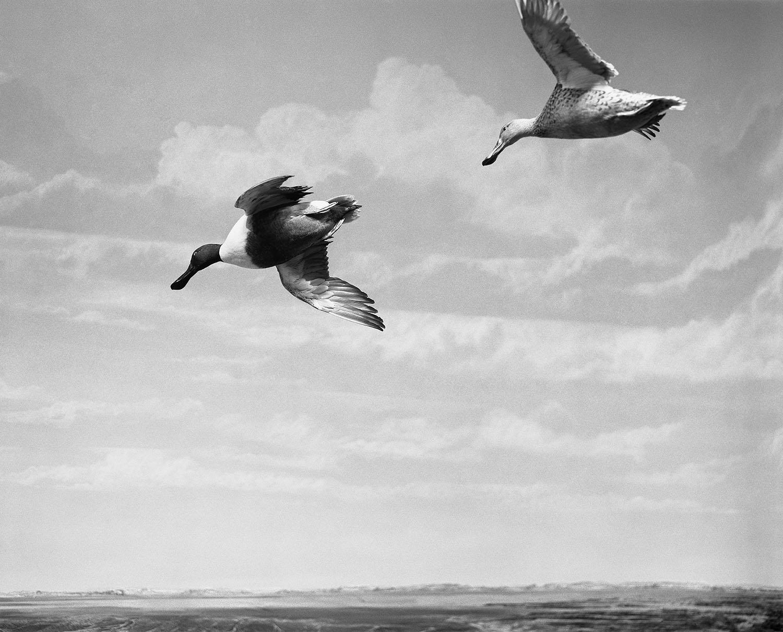 Maison de l'oiseau 03- Claude Belime