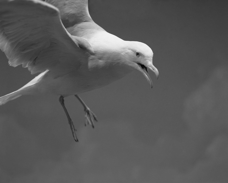 Maison de l'oiseau 04- Claude Belime