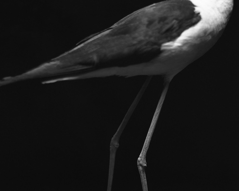 Maison de l'oiseau 09- Claude Belime