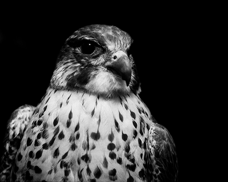 Bouton galerie Maison de l'oiseau
